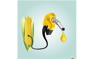 Government raises ethanol price for blending in petrol by 25 per cent